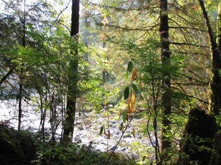 Trail scenery